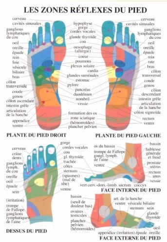 zones reflexes du pied